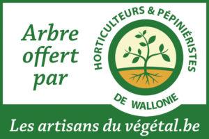 Plantons des arbres remarquables\' – Les artisans du vegetal